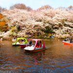 カップルが集まる街!吉祥寺のセレクト・デートスポットご紹介!のサムネイル画像