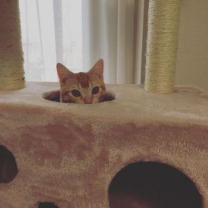 【猫飼いさんの必須アイテム】猫が喜ぶキャットタワー特集まとめのサムネイル画像