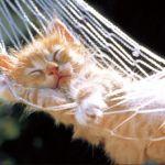 木製キャットタワーが人気!猫が喜ぶ天然素材のキャットタワー特集!のサムネイル画像