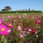 春になったらお花いっぱいの公園デート!公園ファッション教えますのサムネイル画像