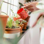 留守中の水やり方法!植木鉢のペットボトルを使った自動水やり器のサムネイル画像