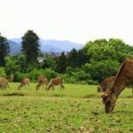奈良公園、デートで行くならどこへ行く?おすすめスポットまとめのサムネイル画像