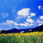 暑さが厳しい夏にも心を和ませてくれる、夏に咲くお花まとめ!のサムネイル画像