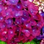 花の種類って本当に多いですよね。季節の花の種類を見てみましょう♪のサムネイル画像