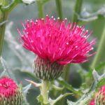 9月に咲く美しい花について、あなたはどのくらい知っていますか?のサムネイル画像