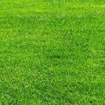 目指せステキなお庭!自分でやってみよう 芝生の張り方教えますのサムネイル画像