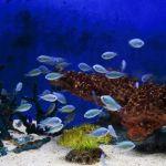 思ったより難しくない?初心者さんにオススメの熱帯魚、教えます!のサムネイル画像