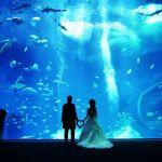 海の生き物に囲まれて幸せいっぱい!密かなブーム、水族館結婚式のサムネイル画像