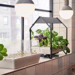 【家庭菜園】スポンジで出来る?!意外とカンタン!水耕栽培の始め方のサムネイル画像