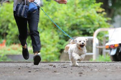犬と暮らしやすい社会を目指す活動を一緒にしませんか?DogHuggyサポー...