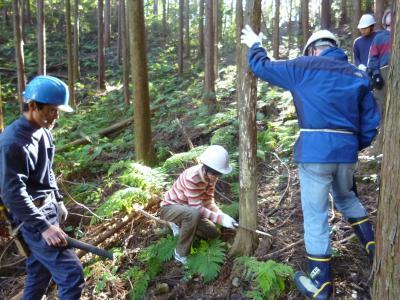 11/4(土) 埼玉・飯能 ノコギリで 木を伐る!間伐体験イベント