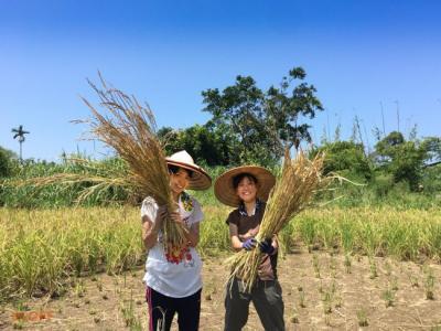 【夏休み】日本語OKの台湾で自然農法を学ぼう【村おこしボランティア台...