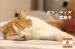 保護猫カフェで「猫助け」しませんか?【東京】