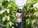 【夏休み】南の島の楽園「喜界島」で同年代の仲間と農業ボランティア!