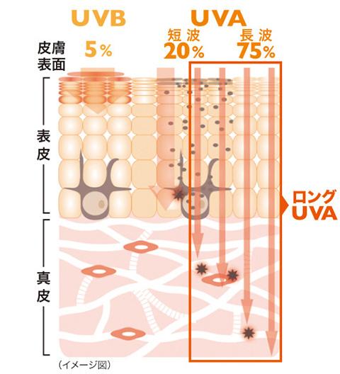 UVB UVA イメージ図
