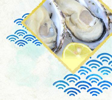 【マルコ水産】自宅でオイスターバーセット!シングルシードオイスター[殻付き]20個[生食用]オイスターナイフ付き