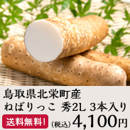 ねばりっこ 秀2L3本入り 鳥取県北栄町産