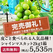 皮ごと食べられる人気品種!シャインマスカット2kg1箱 鳥取県北栄町産