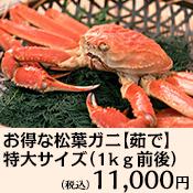 ★訳あり★  お得な松葉ガニ特大サイズ(1kg前後)【茹で】