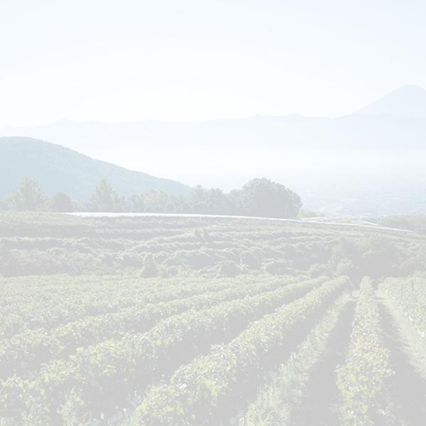 ワイン産地マスターコース