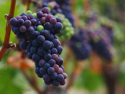 ニュージーランド・ワインはもっと美味しい!