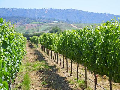 チリワインの現在を楽しむ~現地ワイナリー取材レポート