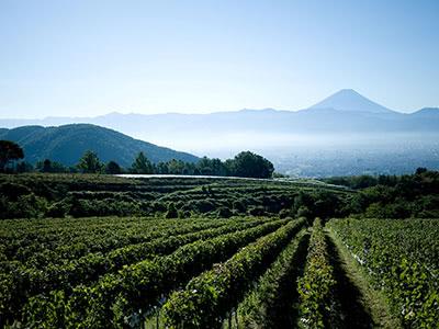 生産者と見る今の日本ワイン