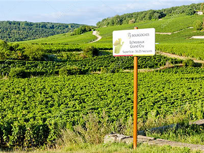 Quintessence of Burgundy  ブルゴーニュの精髄Ⅰ