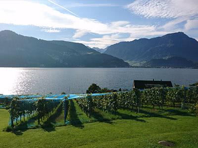 坂東彌十郎さんとワインで旅するスイス