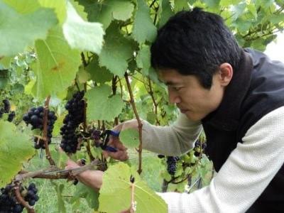 【特別セミナー】ニュージーランド・ワインはもっと美味しい!〜KIMURA CELLARS 木村滋久氏をお迎えして