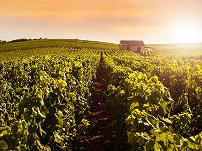 現地クルティエ(バイヤー)による、1歩進んだ生産者及び畑目線でのシャンパーニュの世界