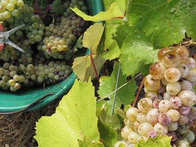 Vin Nature と Val de Loire