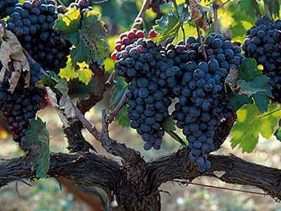ギリシャワインの魅力を探る Level 2 世界が注目するギリシャ2大品種の魅力に迫る