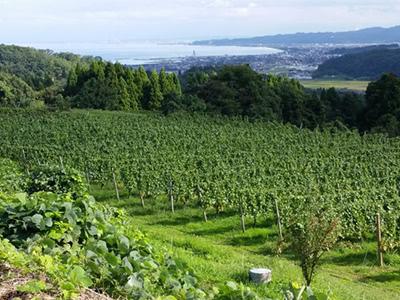 日本ワインのテロワール