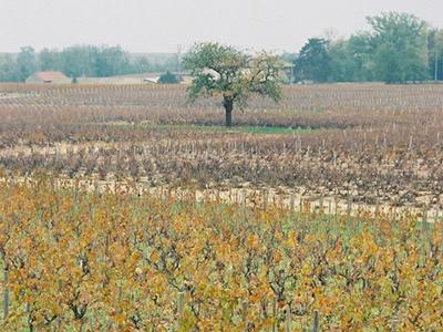 Vin Nature (自然派ワイン)を知る 1