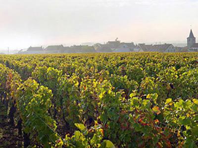 Quintessence of Burgundy ブルゴーニュの精髄 2