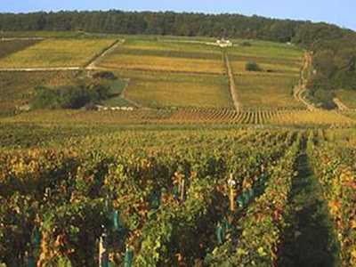 Quintessence of Burgundy ブルゴーニュの精髄 3