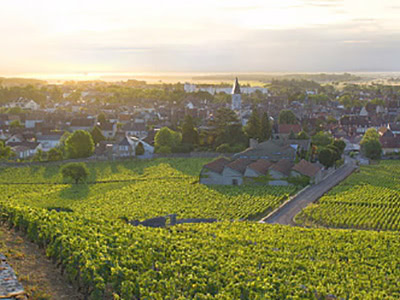 Quintessence of Burgundy ブルゴーニュの精髄 5