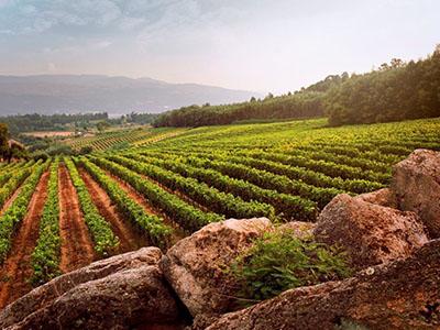 【ダオンワイン協会公認特別セミナー】ダオンワイン〜ポルトガルの隠れた宝石