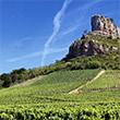 フランスの銘醸地、ブルゴーニュのブドウ畑