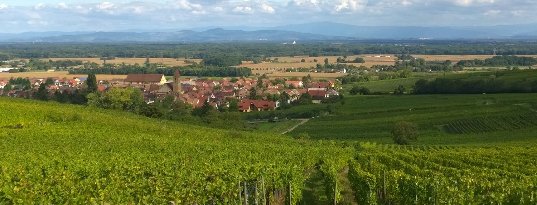 春の訪れを感じるワイン