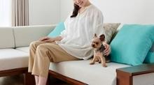 ペットと人に優しいソファの選び方