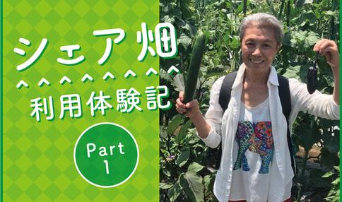【シェア畑利用体験談 part1】等々力の農園でお話を聞いてきました
