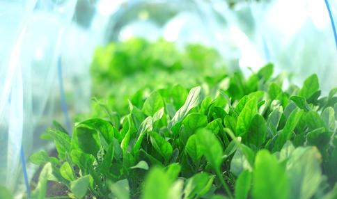 【菜園アドバイザー全員アンケート・結果発表2】現役アドバイザーの栽培経験は何年くらい?