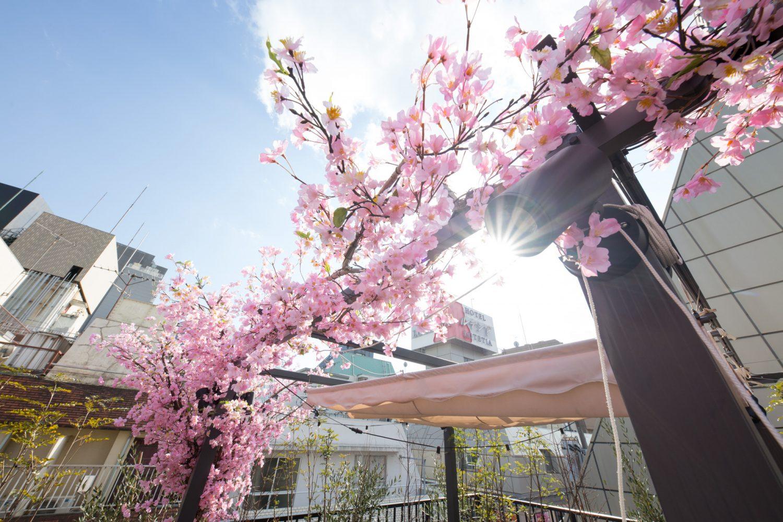 Lounge-R TERRACE 渋谷   【昼桜】3/15~4/30の期間限定で、有料オプションの「屋上テラス」にインドア花見装飾を行います!