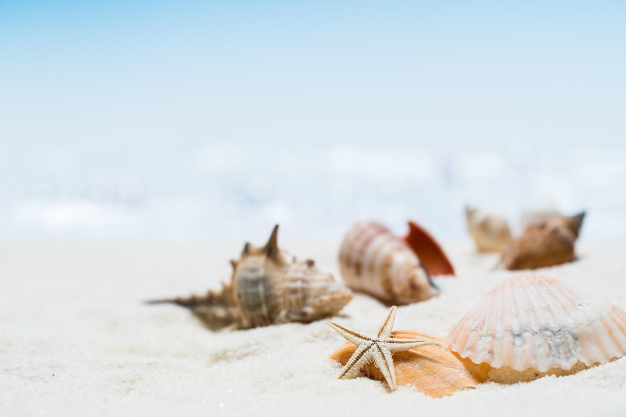 夏デートを満喫!この夏、カップルにおすすめしたいレンタルスペース3選|TIME SHARING|タイムシェアリング|スペースマネジメント|あどばる|adval|SHARING