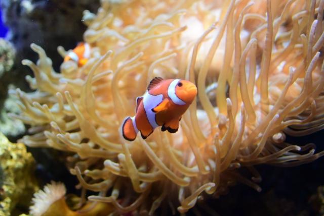 【体験必須】久米島の人気ダイビングスポット13選!見どころを余すことなくご紹介!