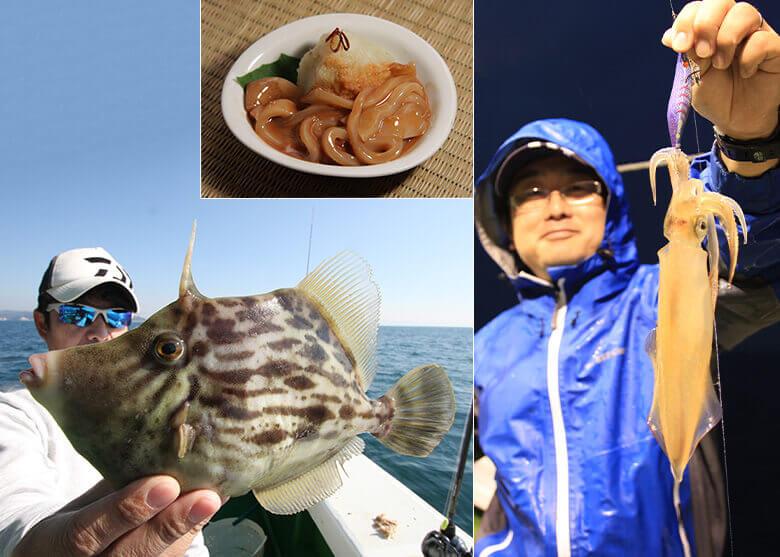 食欲の秋がやって来た! 釣り上げた魚を美味しくいただくために【第4回 カワハギとイカ類バッチリ処理編】