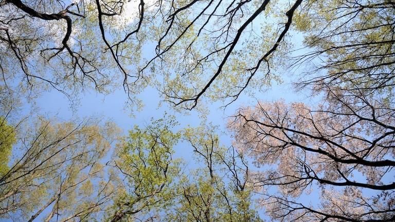 植物の謎解き ひと足早く春の植物観察に出かけよう!
