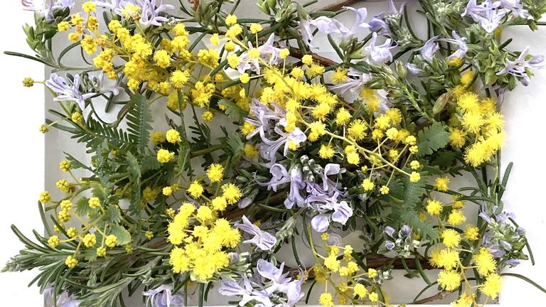 春色ペアを探して、ボックス生け花をつくろう!